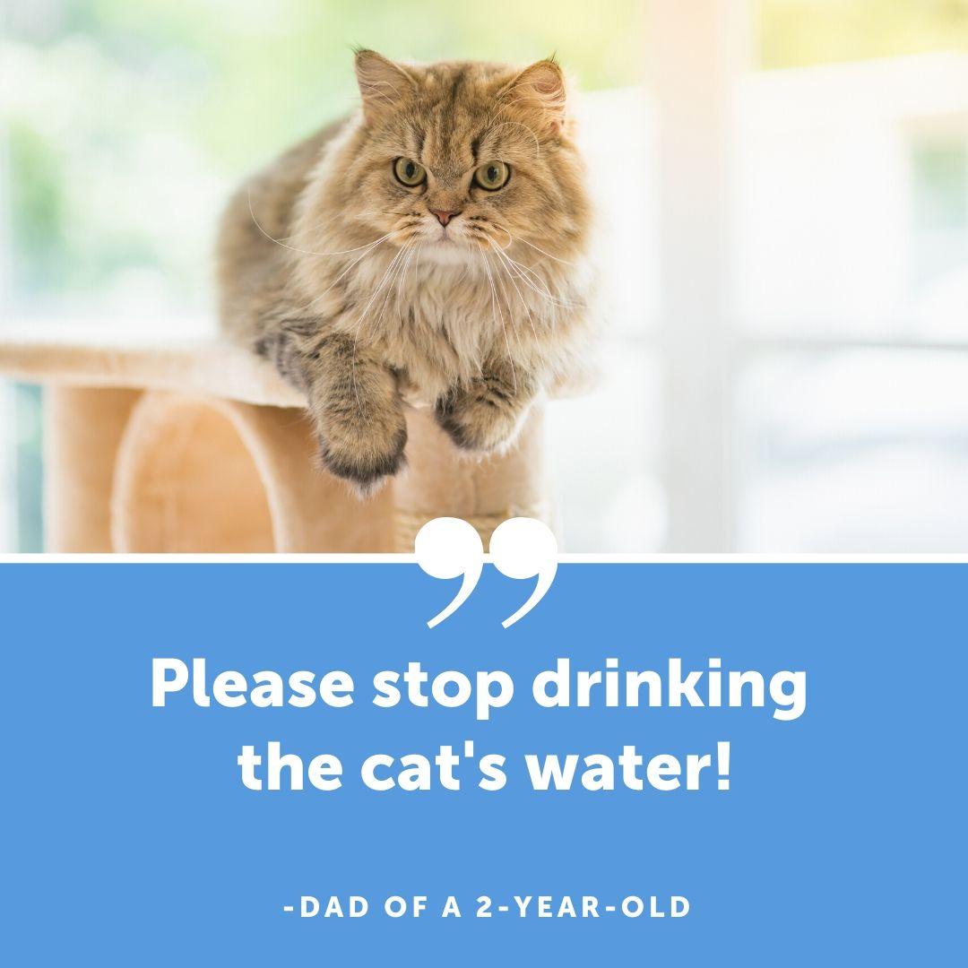drinking cat water