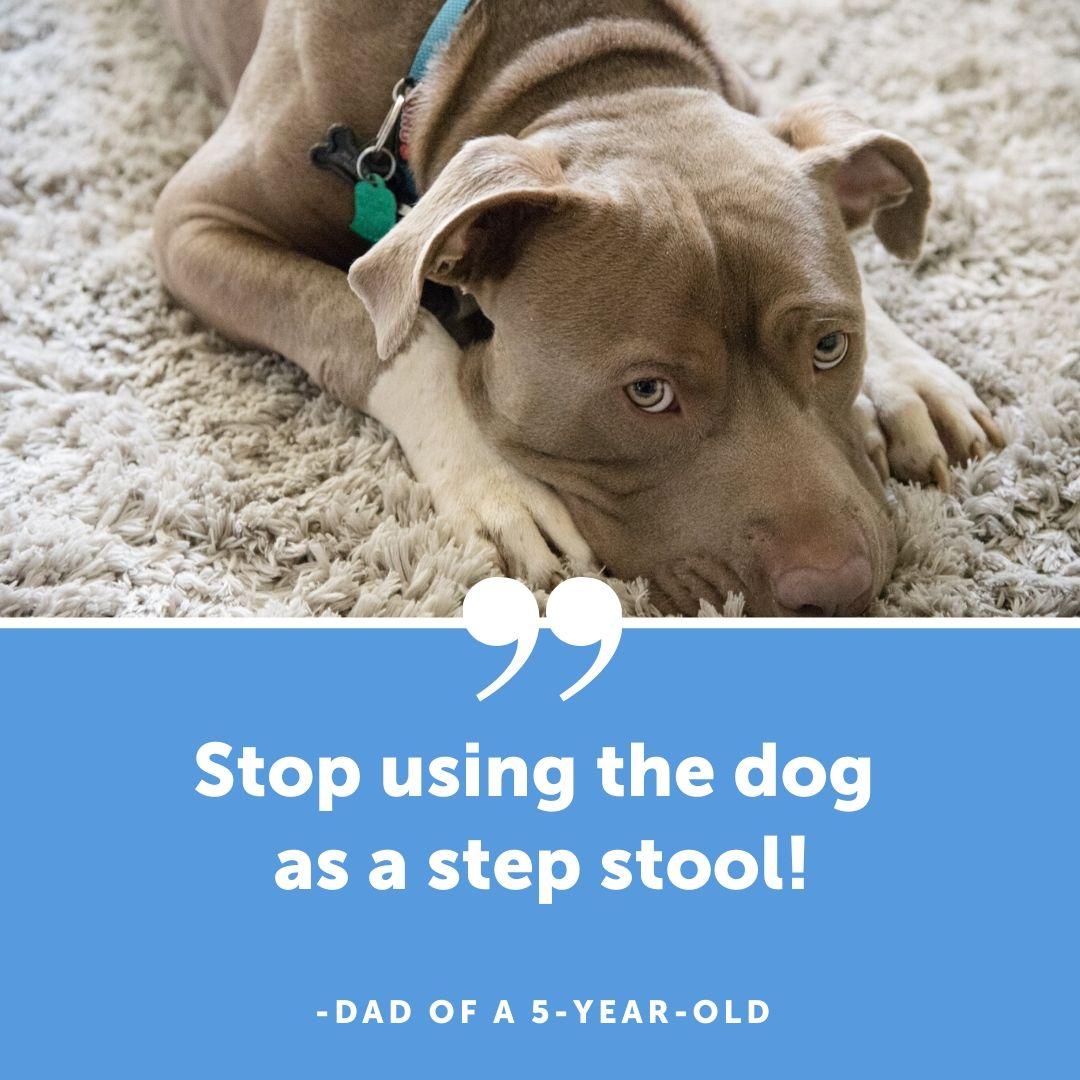 dog as stool